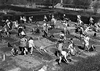 Kindergarteners at work on their victory garden plots, May 1942
