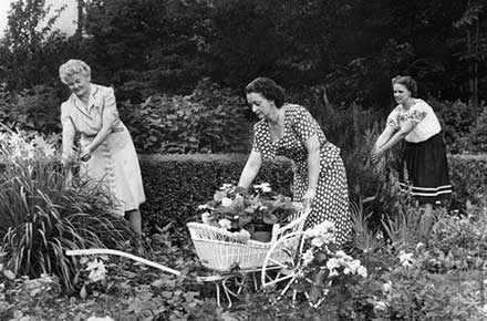 Three women gardening, 1947